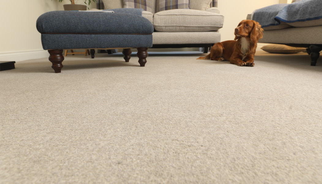 Super Carpet Buying Guide Scs Interior Design Ideas Inamawefileorg